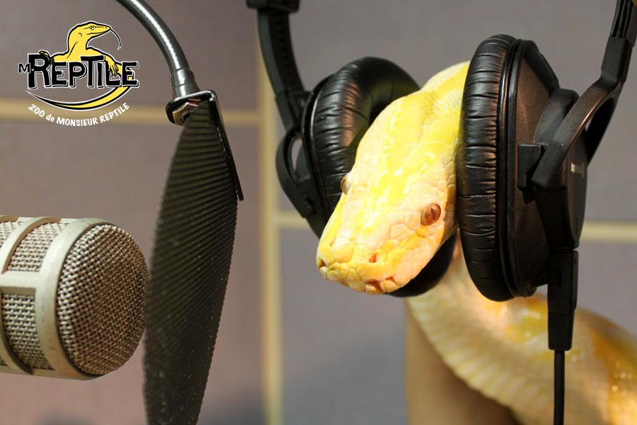 Python radio-web